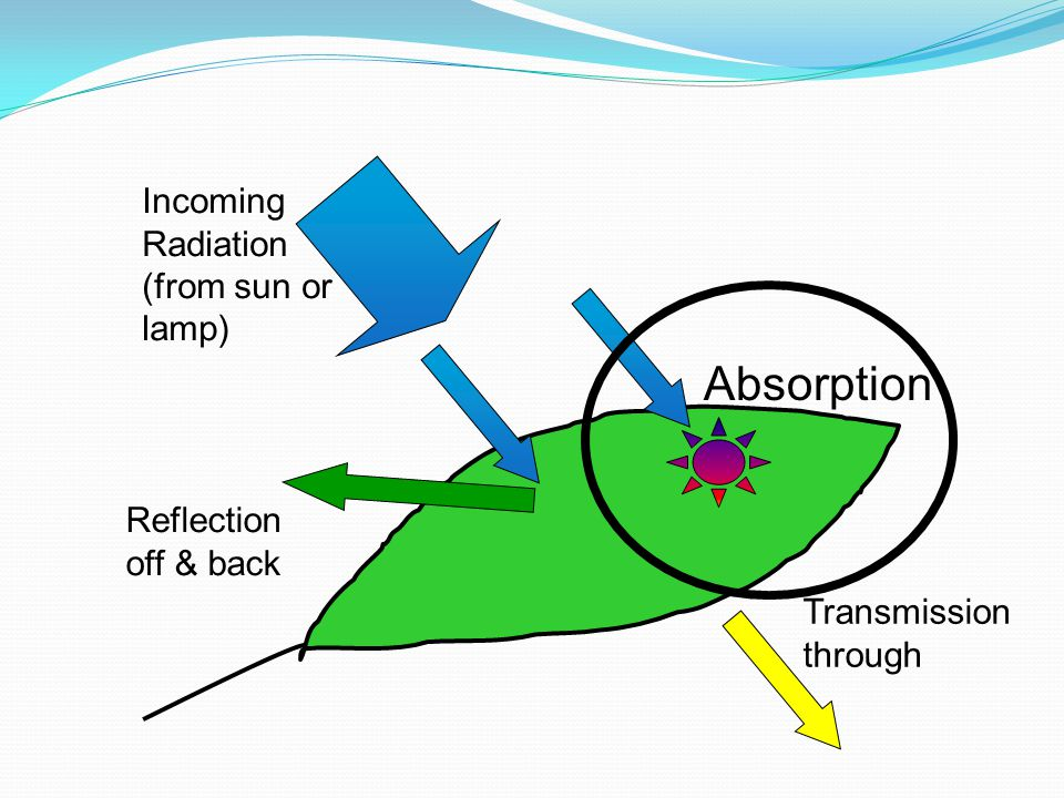 Incoming Radiation (from sun or lamp) Transmission through Reflection off & back Absorption
