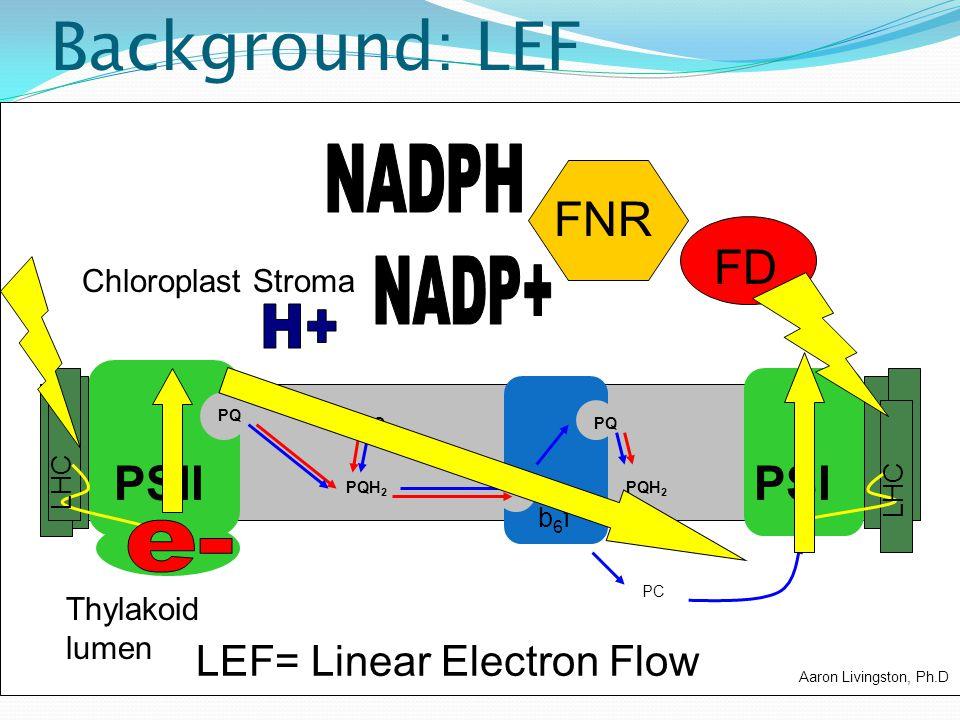 Background: LEF LEF= Linear Electron Flow FD PC PSIIPSI b6fb6f PQ PQH 2 LHC PQ FNR Chloroplast Stroma Thylakoid lumen Aaron Livingston, Ph.D