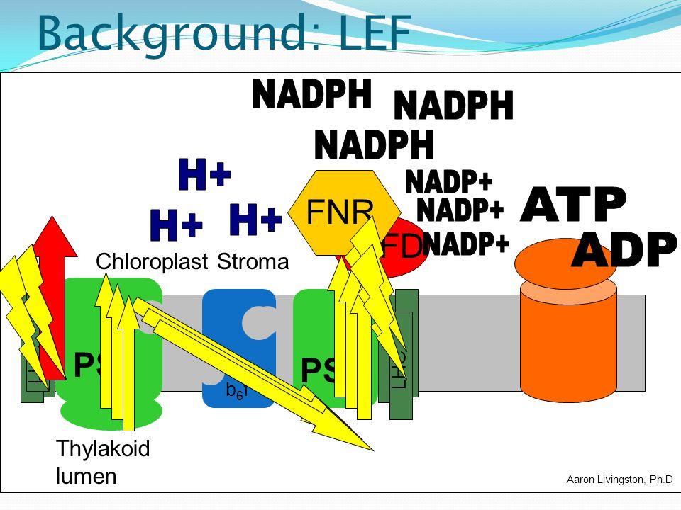 Background: LEF FD PSII PSI b6fb6f PQ LHC FNR Chloroplast Stroma Thylakoid lumen Aaron Livingston, Ph.D