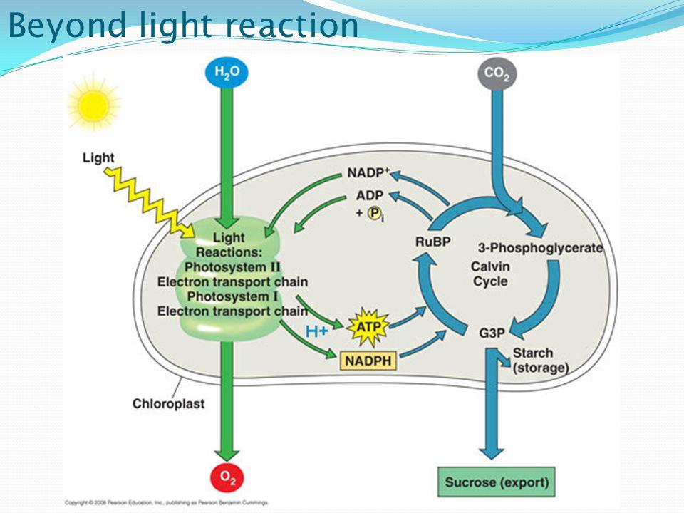 Beyond light reaction