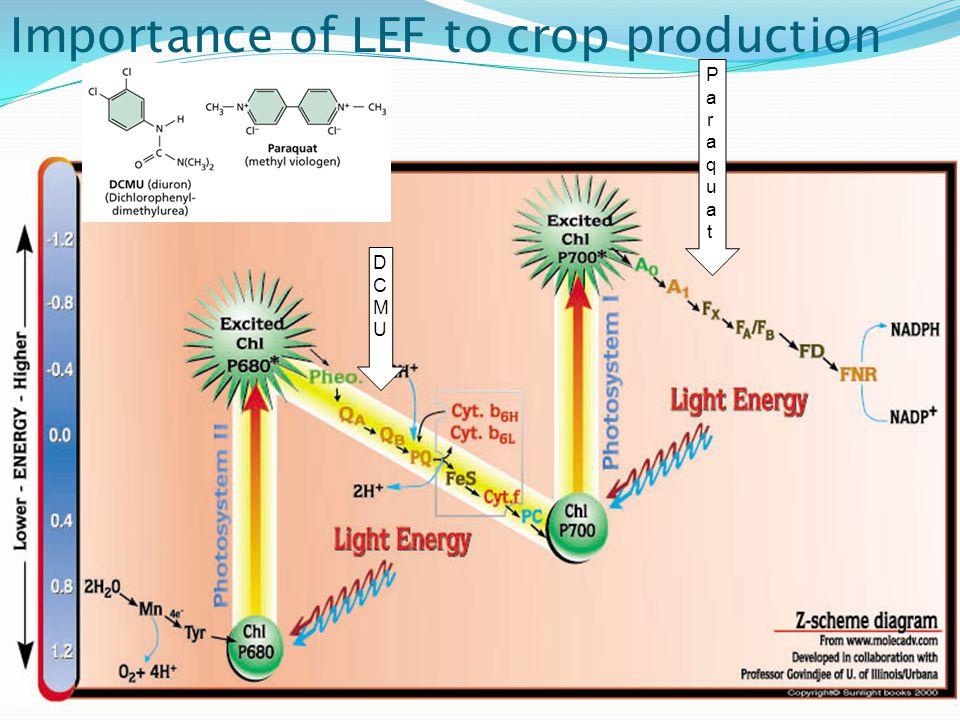 Importance of LEF to crop production DCMUDCMU ParaquatParaquat