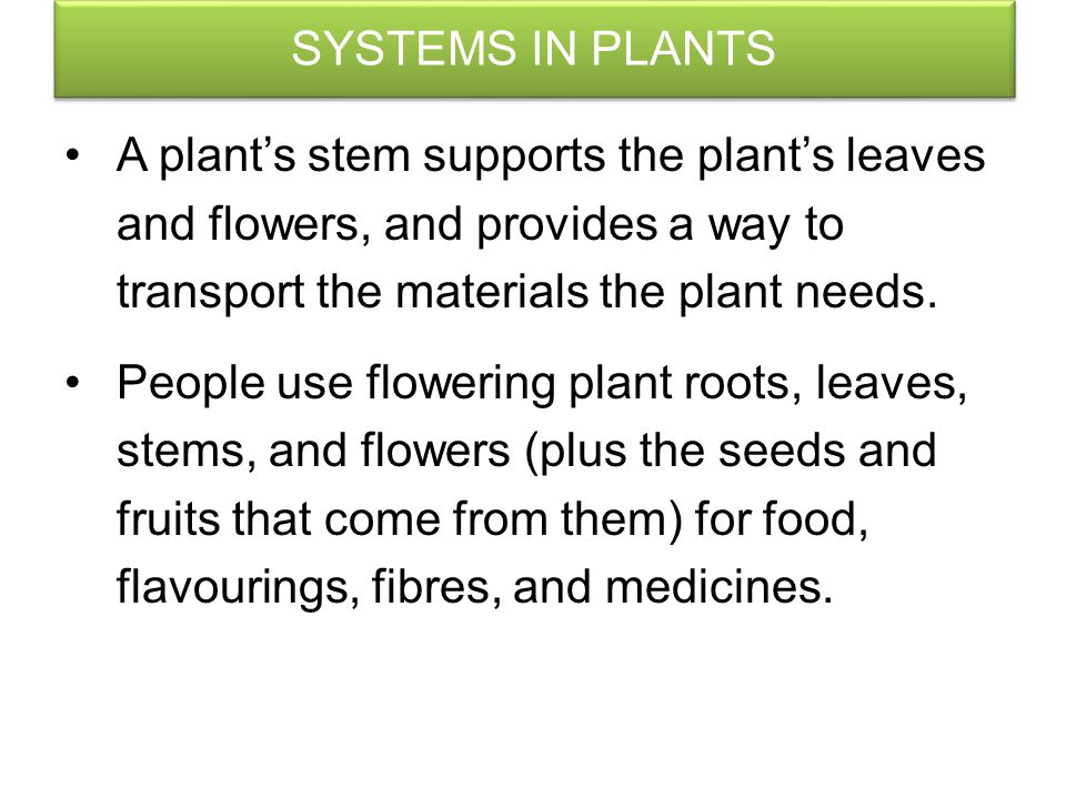 SYSTEMS IN PLANTS Flowers contain male or female reproductive structures. Male reproductive structures produce pollen grains. Female structures produc