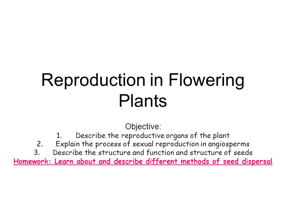 Plenary..1.What is the function of the flower. 2.What is a seed.