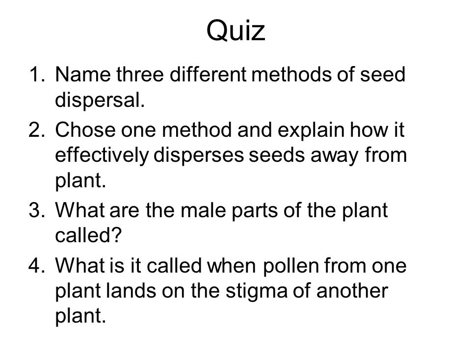Quiz 1.Name three different methods of seed dispersal. 2.Chose one method and explain how it effectively disperses seeds away from plant. 3.What are t