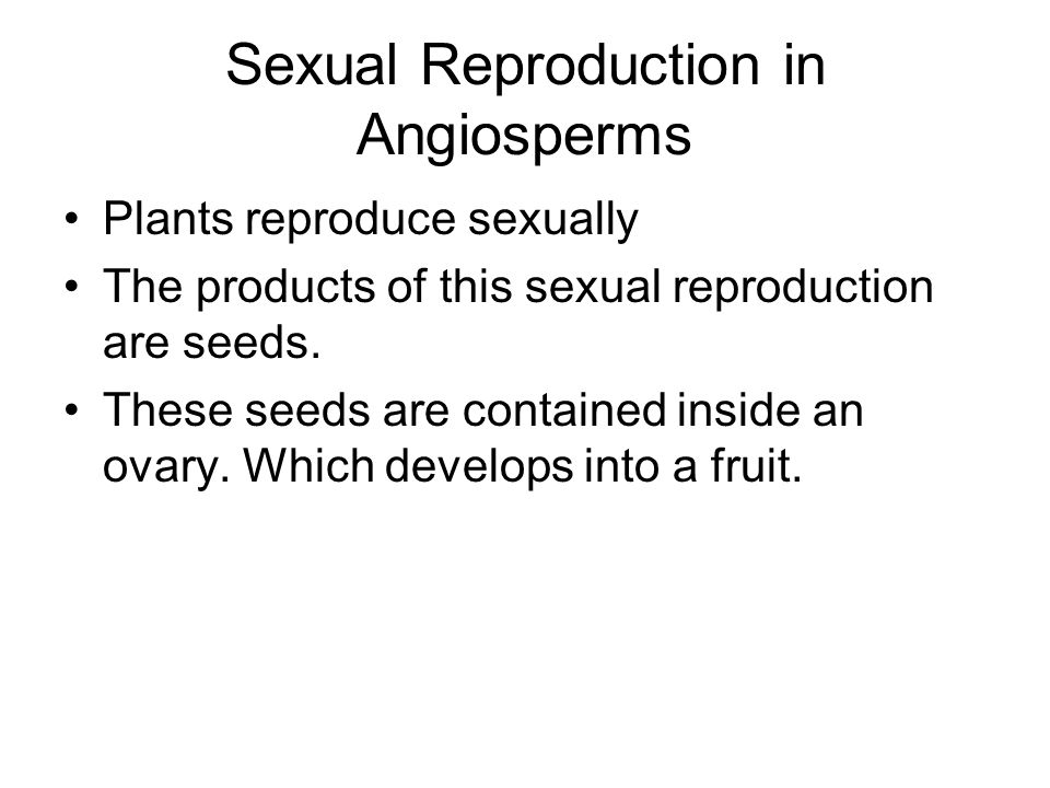 Sexual Reproduction in Angiosperms Plants reproduce sexually The products of this sexual reproduction are seeds. These seeds are contained inside an o
