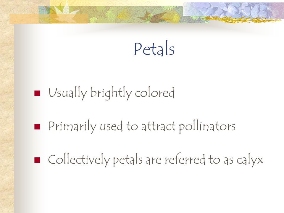 Petals Usually brightly colored Primarily used to attract pollinators Collectively petals are referred to as calyx