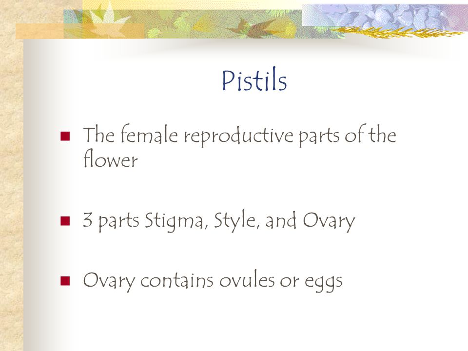 Pistils The female reproductive parts of the flower 3 parts Stigma, Style, and Ovary Ovary contains ovules or eggs