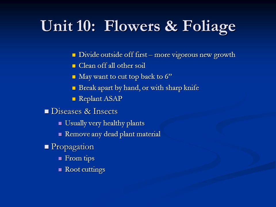 Unit 10: Flowers & Foliage Divide outside off first – more vigorous new growth Divide outside off first – more vigorous new growth Clean off all other