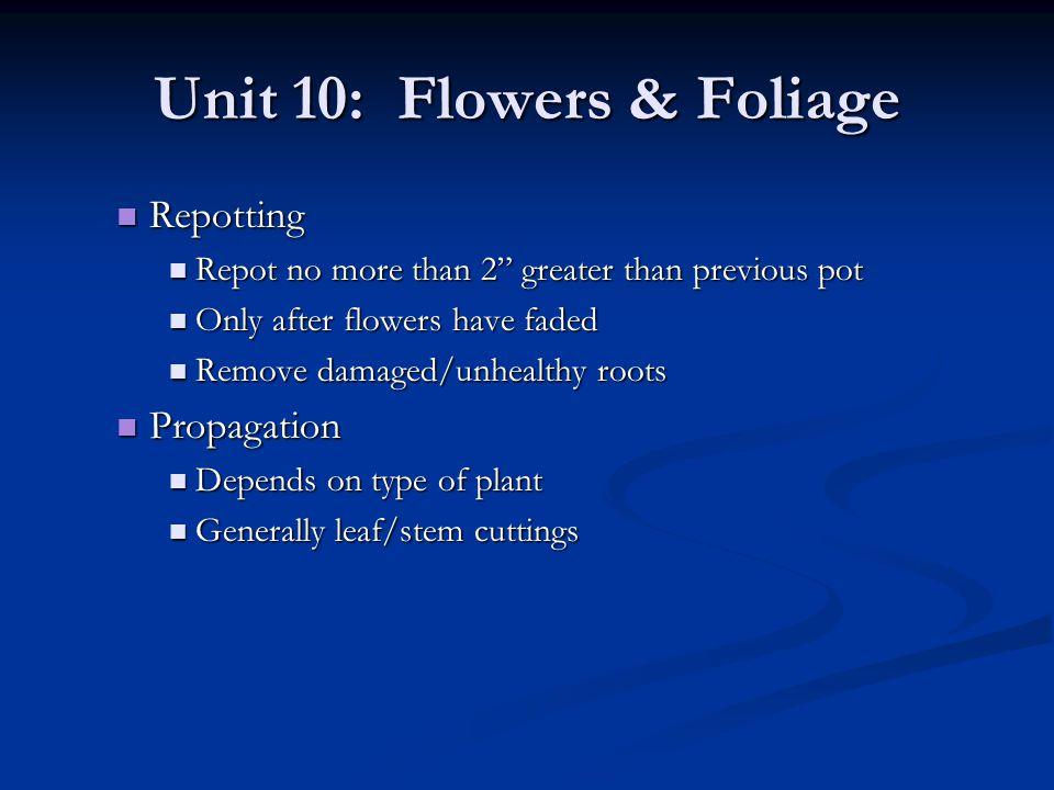 Unit 10: Flowers & Foliage Repotting Repotting Repot no more than 2 greater than previous pot Repot no more than 2 greater than previous pot Only afte
