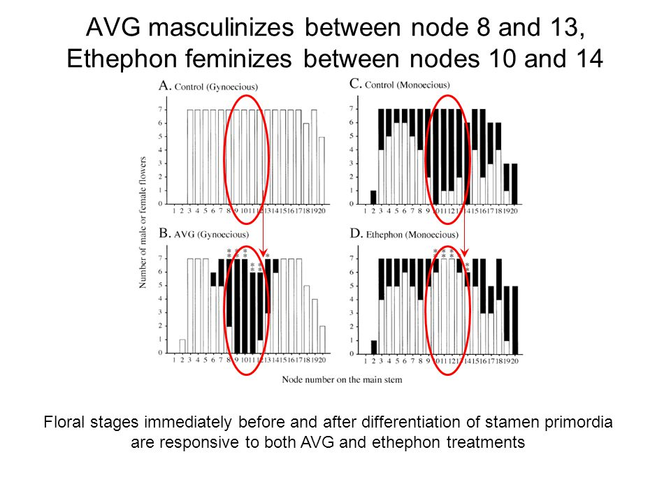 AVG masculinizes between node 8 and 13, Ethephon feminizes between nodes 10 and 14 Floral stages immediately before and after differentiation of stame