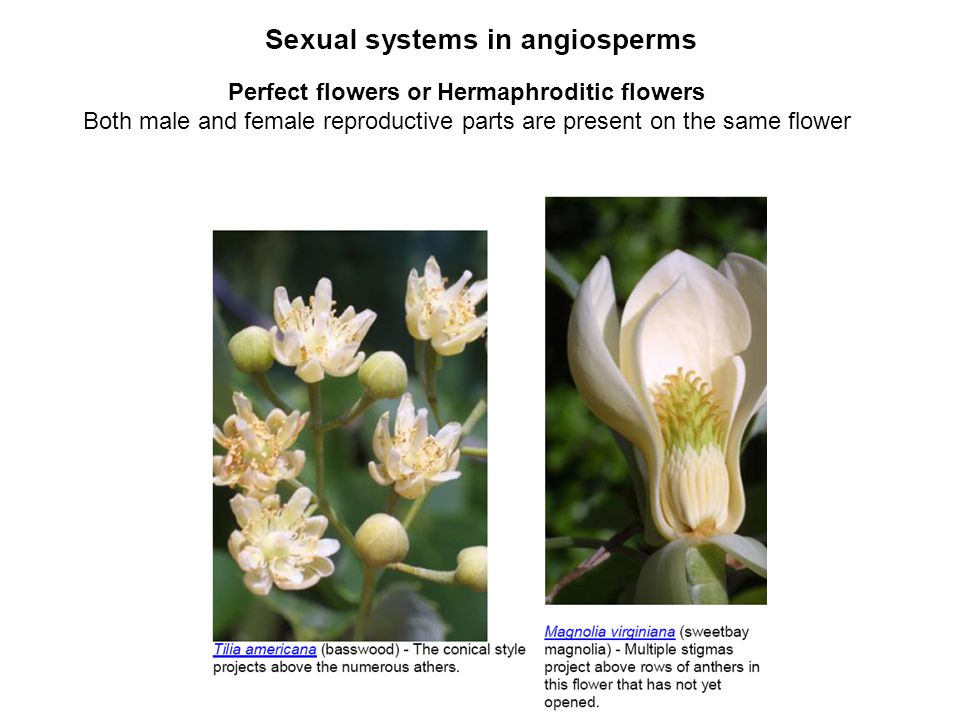 Perfect flowers or Hermaphroditic flowers Both male and female reproductive parts are present on the same flower