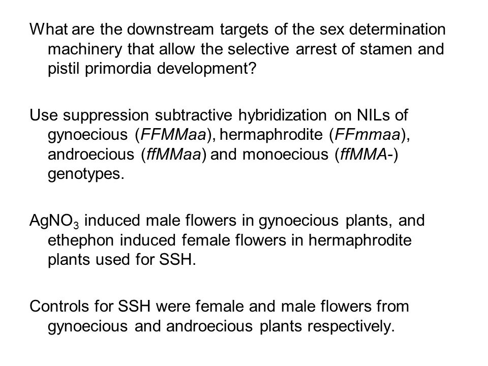 What are the downstream targets of the sex determination machinery that allow the selective arrest of stamen and pistil primordia development? Use sup