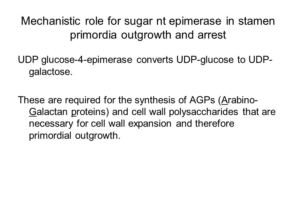 Mechanistic role for sugar nt epimerase in stamen primordia outgrowth and arrest UDP glucose-4-epimerase converts UDP-glucose to UDP- galactose. These