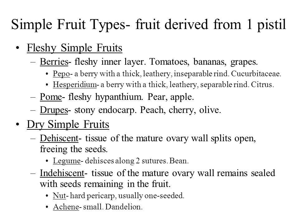 Simple Fruit Types- fruit derived from 1 pistil Fleshy Simple Fruits –Berries- fleshy inner layer. Tomatoes, bananas, grapes. Pepo- a berry with a thi