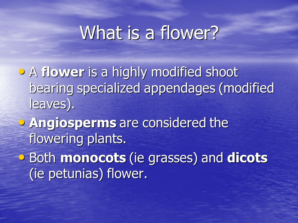 What is a flower.