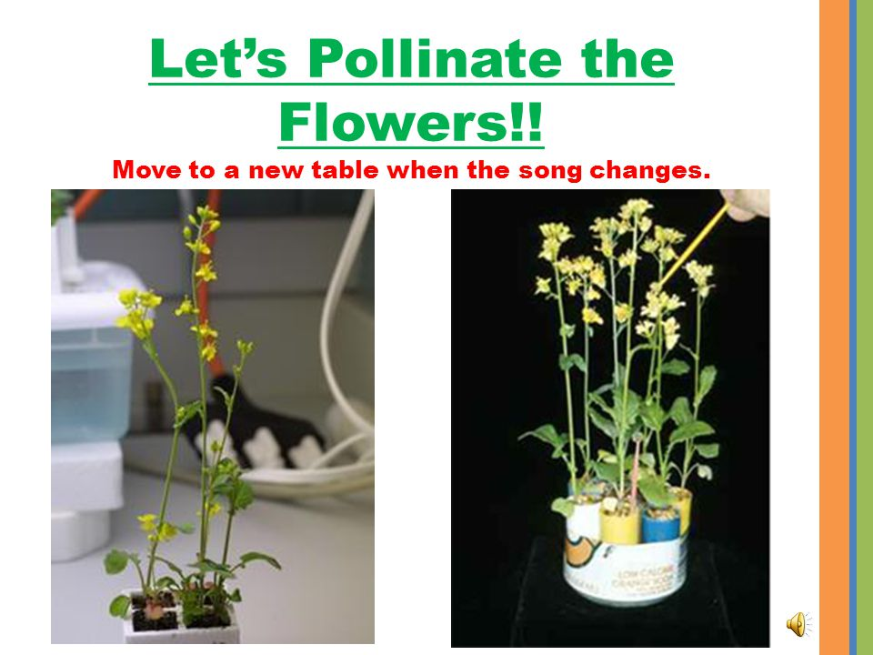 Pollinate flowers everyday there are blooms. Lets Pollinate the Flowers!.