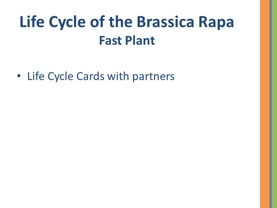 Life Cycle of the Brassica Rapa Fast Plant Life Cycle Cards with partners