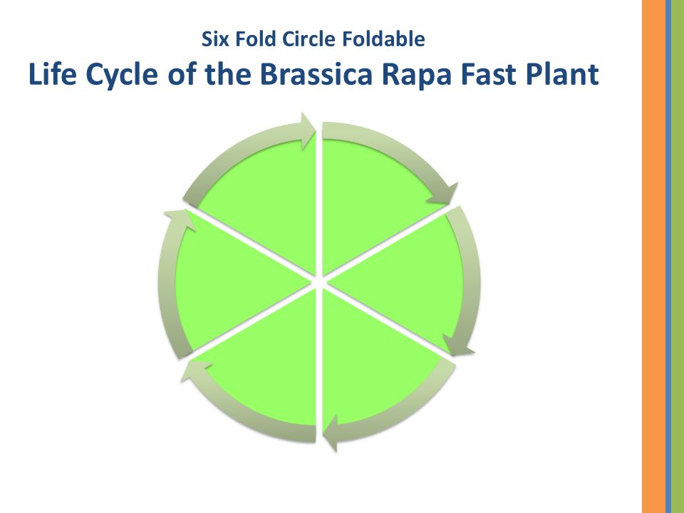 Six Fold Circle Foldable Life Cycle of the Brassica Rapa Fast Plant