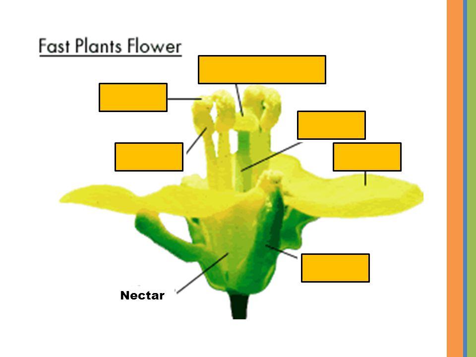Pistil Nectar Petal Sepal Anther Sticky stigma Pollen