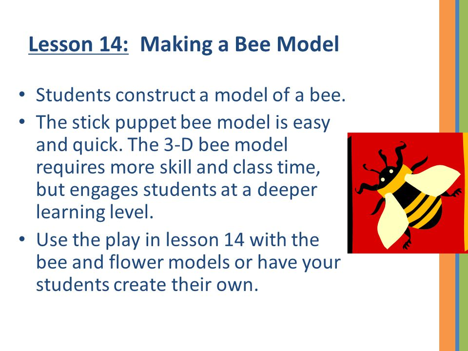 Lesson 14: Making a Bee Model Students construct a model of a bee. The stick puppet bee model is easy and quick. The 3-D bee model requires more skill