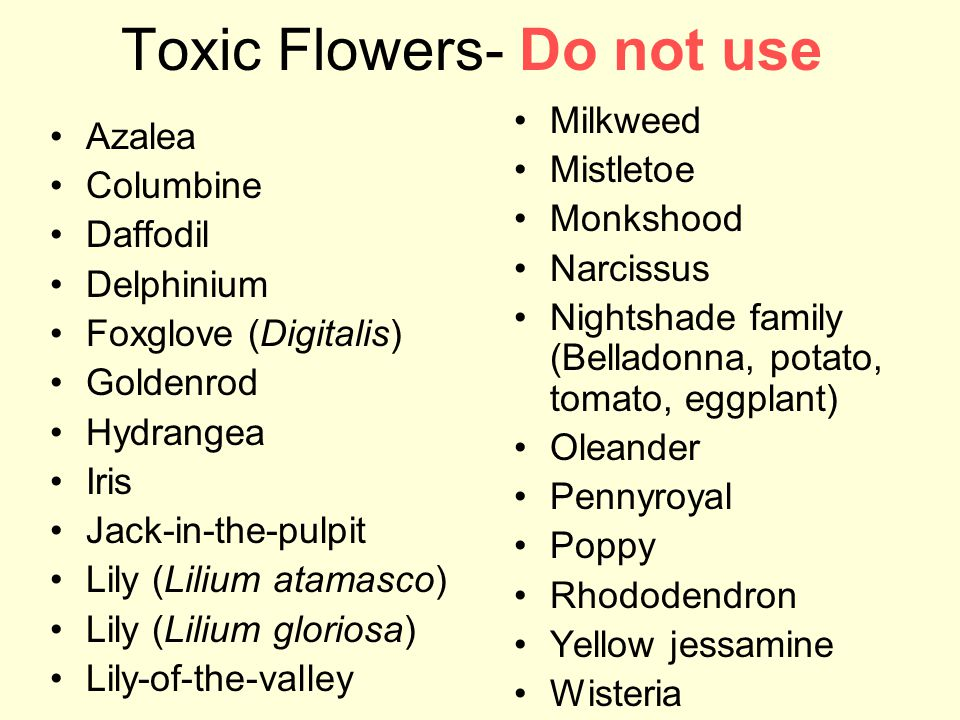 Toxic Flowers- Do not use Azalea Columbine Daffodil Delphinium Foxglove (Digitalis) Goldenrod Hydrangea Iris Jack-in-the-pulpit Lily (Lilium atamasco) Lily (Lilium gloriosa) Lily-of-the-valley Milkweed Mistletoe Monkshood Narcissus Nightshade family (Belladonna, potato, tomato, eggplant) Oleander Pennyroyal Poppy Rhododendron Yellow jessamine Wisteria