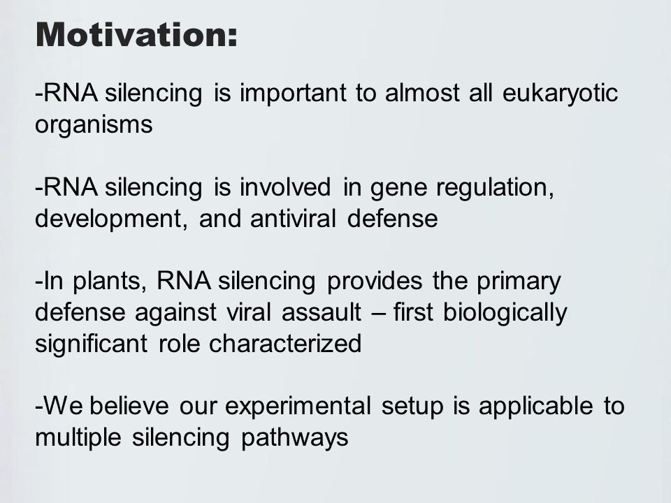 Experimental Model – dsRNA Construct Our stable initiator of silencing is an engineered gene Following transcription, the intron is spliced out and the complementary fragments form a double stranded RNA structure This is cleaved by DCL4 and enters the antiviral silencing pathway