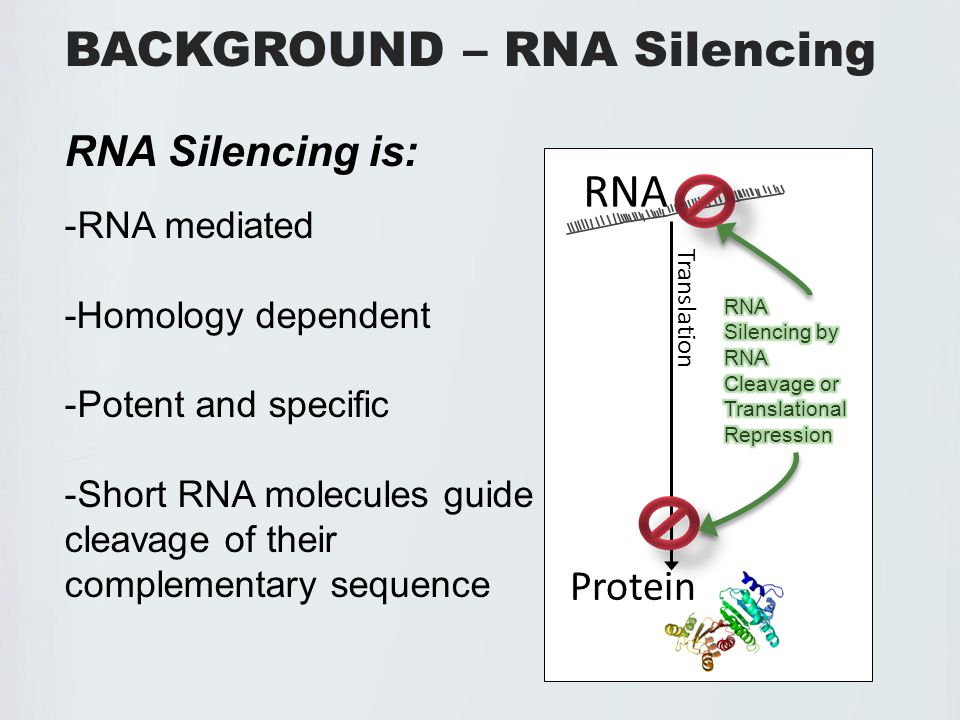 ANTIVIRAL DEFENSE – RNA SILENCING VIRUS VIRUS FREE -Following viral entry, antiviral RNA silencing is initiated -This response produces a signal transported from cell to cell and into vasculature -The signal is thought to move faster than the virus, providing a systemic resistance against the pathogen Suppression Suppression Signal Signal Suppression Suppression Signal Signal SuppressionSignal