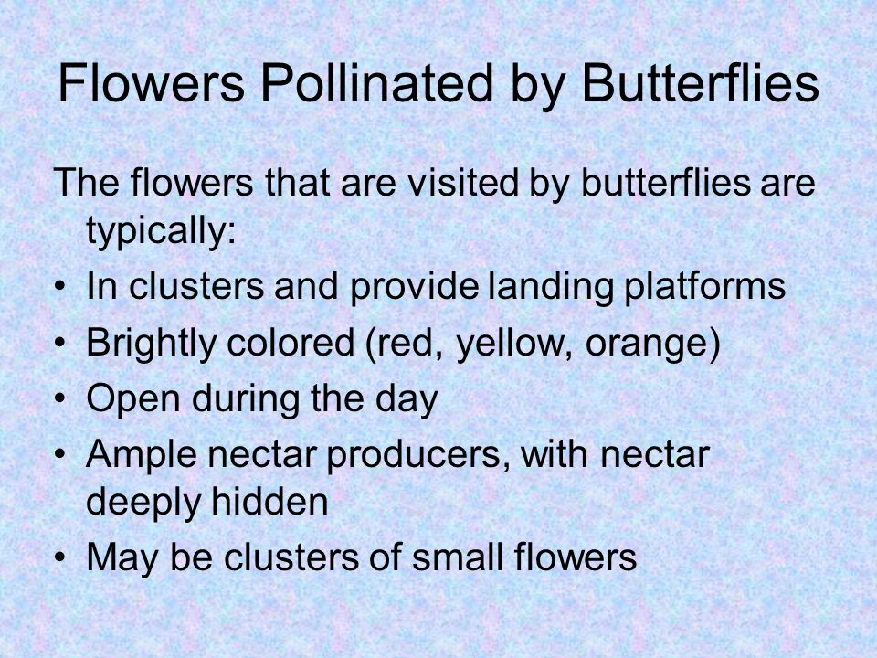 Flowers Pollinated by Butterflies The flowers that are visited by butterflies are typically: In clusters and provide landing platforms Brightly colore