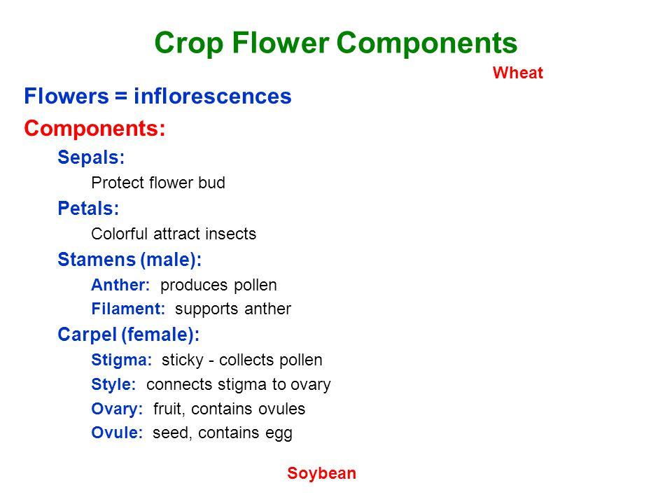 Flower Terminology Complete Flower: Sepals, petals, stamen, carpel.