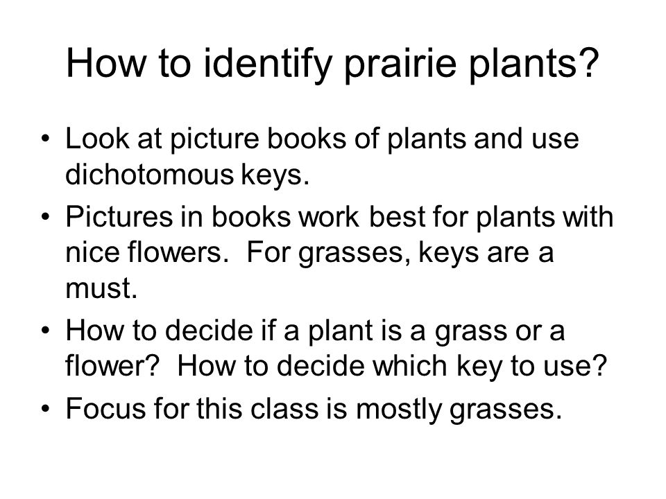 How to identify prairie plants.Look at picture books of plants and use dichotomous keys.