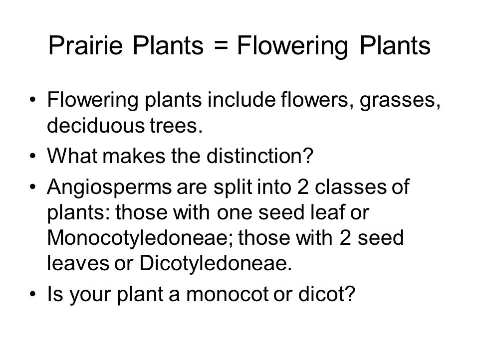 Prairie Plants = Flowering Plants Flowering plants include flowers, grasses, deciduous trees.
