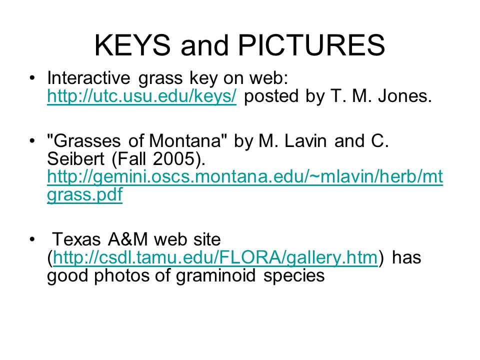 KEYS and PICTURES Interactive grass key on web: http://utc.usu.edu/keys/ posted by T.