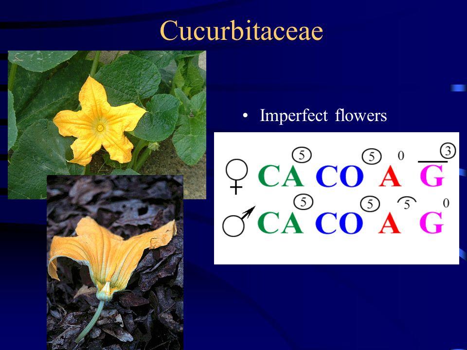 Cucurbitaceae Imperfect flowers