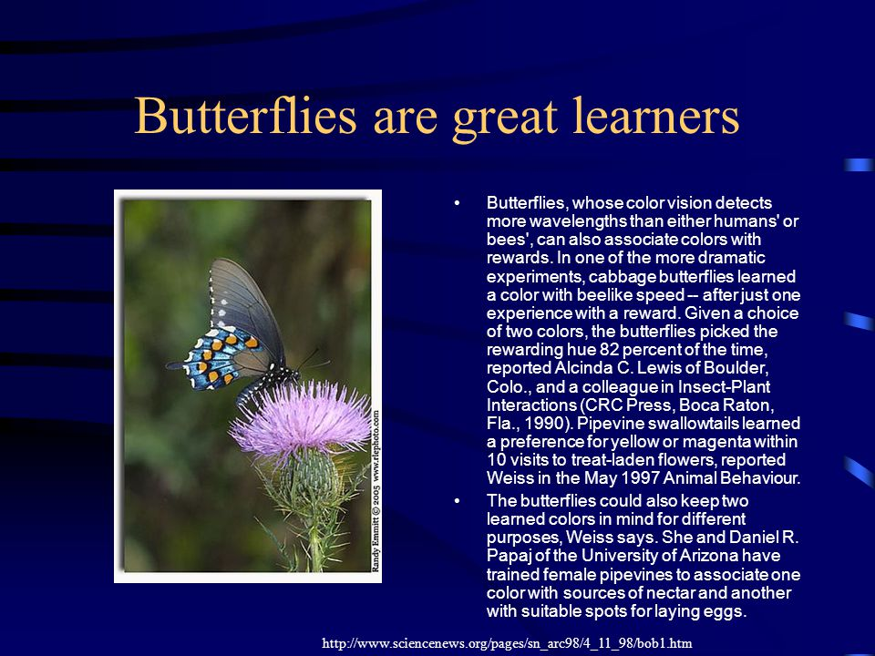 Butterflies are great learners Butterflies, whose color vision detects more wavelengths than either humans' or bees', can also associate colors with r