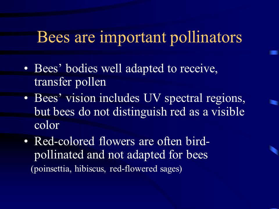 Bees are important pollinators Bees bodies well adapted to receive, transfer pollen Bees vision includes UV spectral regions, but bees do not distingu