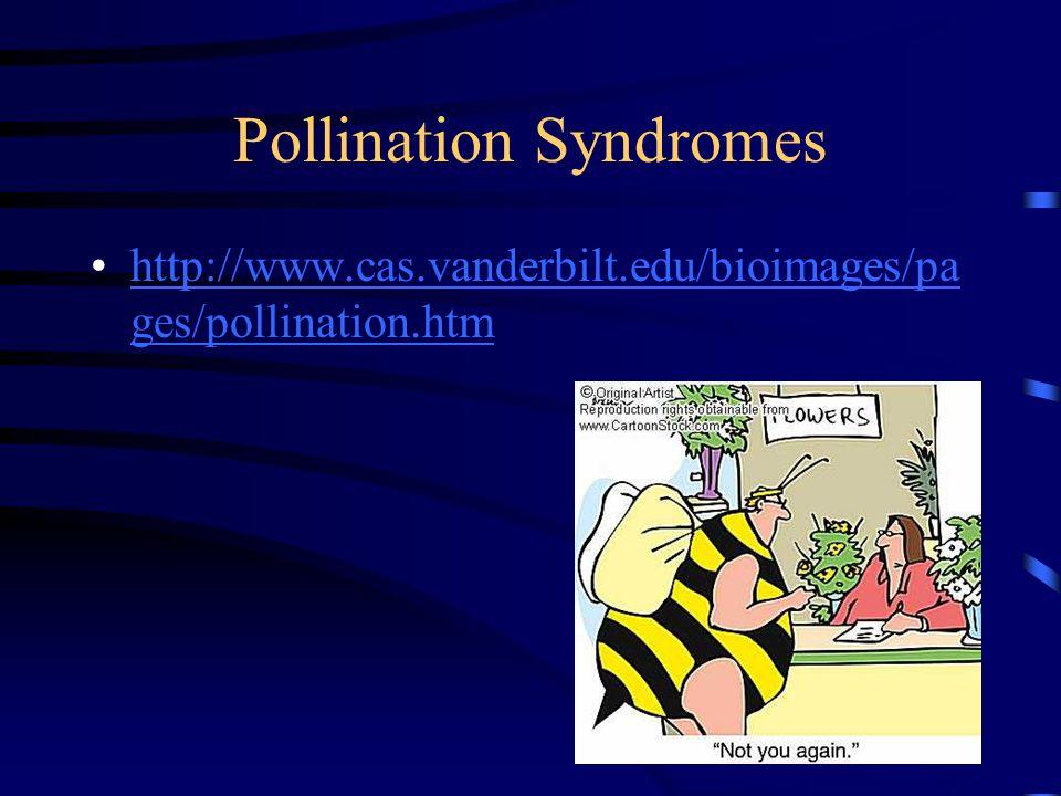 Pollination Syndromes http://www.cas.vanderbilt.edu/bioimages/pa ges/pollination.htmhttp://www.cas.vanderbilt.edu/bioimages/pa ges/pollination.htm