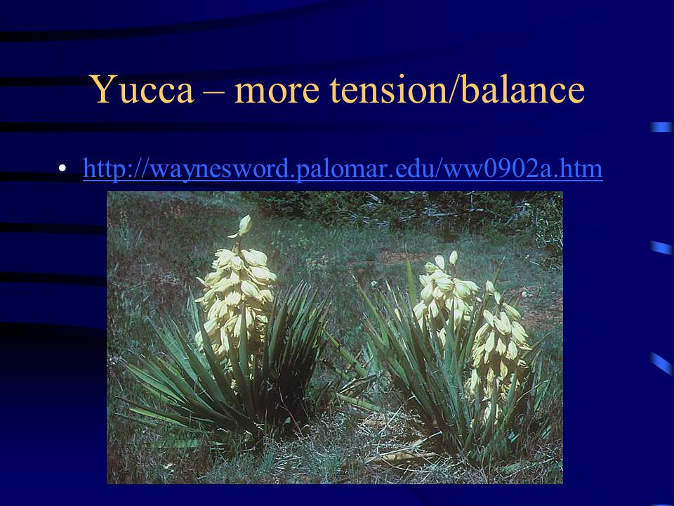 Yucca – more tension/balance http://waynesword.palomar.edu/ww0902a.htm