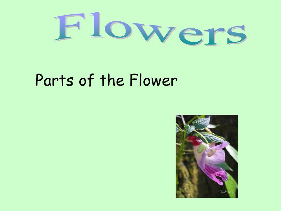The Parts of a Flower Most flowers have four parts: sepals, petals, stamens, carpels.
