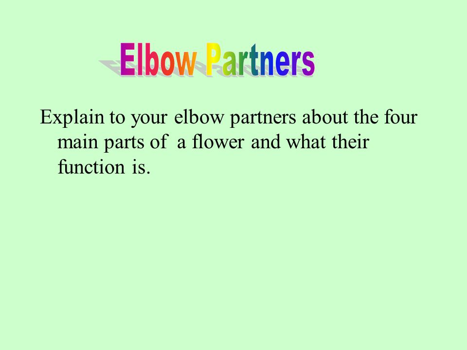 Explain to your elbow partners about the four main parts of a flower and what their function is.