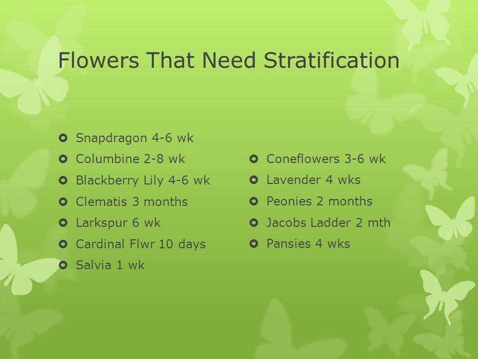 Flowers That Need Stratification Snapdragon 4-6 wk Columbine 2-8 wk Blackberry Lily 4-6 wk Clematis 3 months Larkspur 6 wk Cardinal Flwr 10 days Salvia 1 wk Coneflowers 3-6 wk Lavender 4 wks Peonies 2 months Jacobs Ladder 2 mth Pansies 4 wks