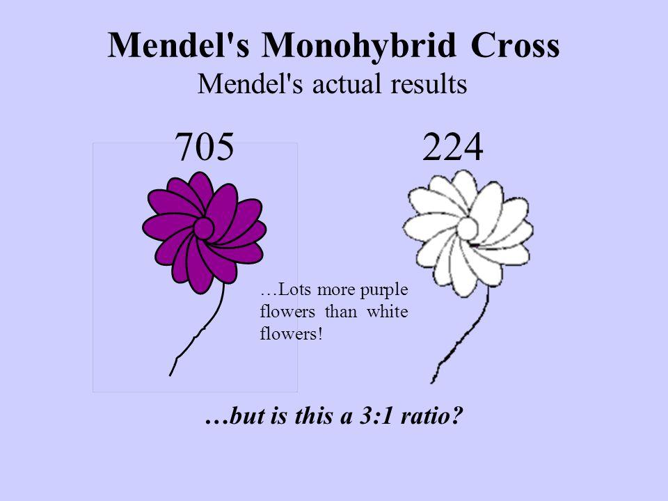 Mendel s Monohybrid Cross 705 Mendel s actual results …Lots more purple flowers than white flowers.