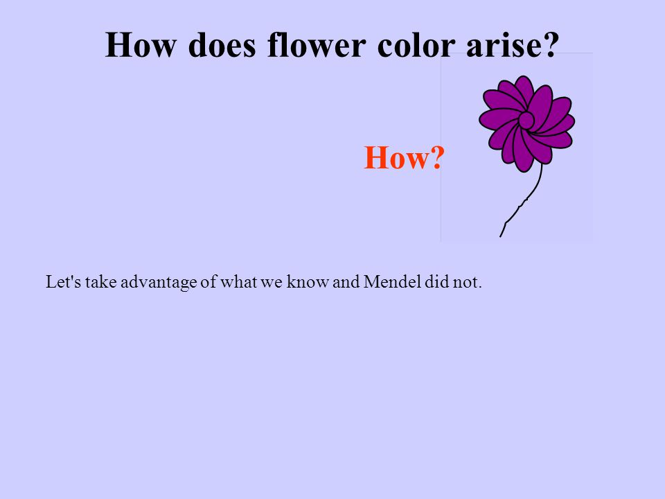 How does flower color arise? How? Let s take advantage of what we know and Mendel did not.