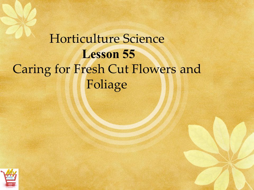 Horticulture Science Lesson 55 Caring for Fresh Cut Flowers and Foliage