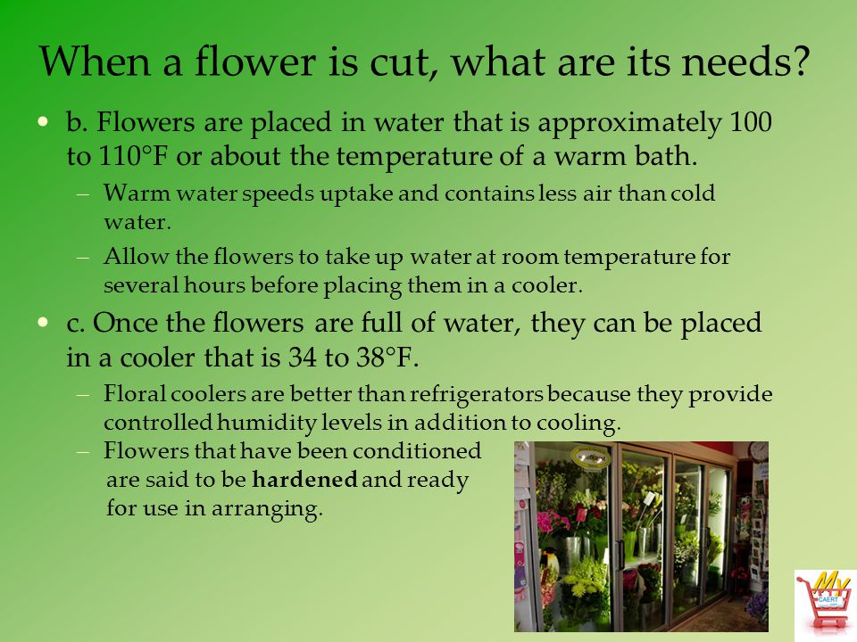 When a flower is cut, what are its needs? b. Flowers are placed in water that is approximately 100 to 110°F or about the temperature of a warm bath. –