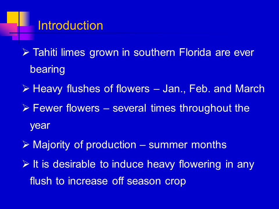 Tahiti limes grown in southern Florida are ever bearing Heavy flushes of flowers – Jan., Feb. and March Fewer flowers – several times throughout the y