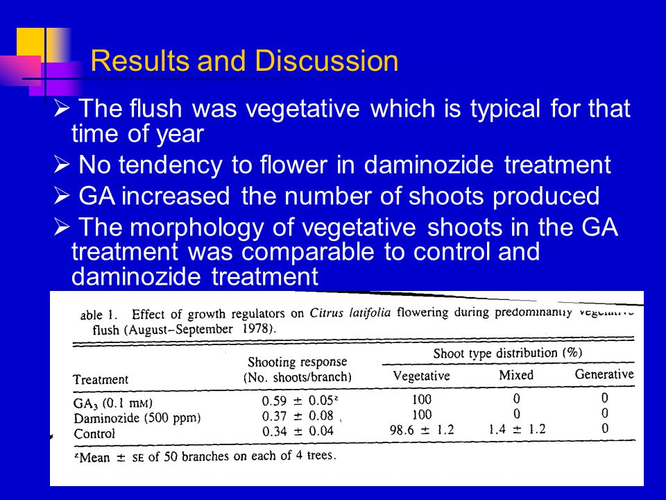 The flush was vegetative which is typical for that time of year No tendency to flower in daminozide treatment GA increased the number of shoots produc