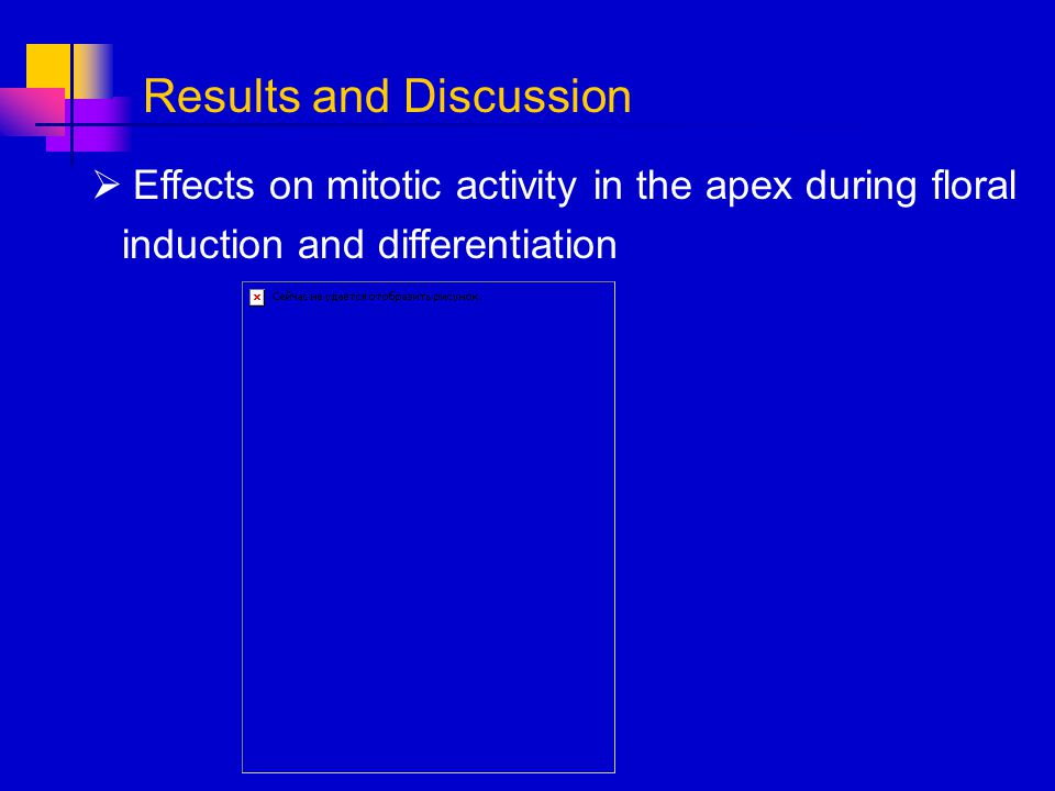 Effects on mitotic activity in the apex during floral induction and differentiation Results and Discussion