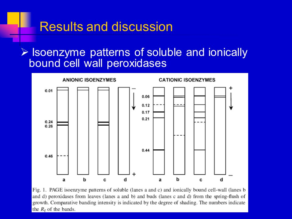 Isoenzyme patterns of soluble and ionically bound cell wall peroxidases Results and discussion