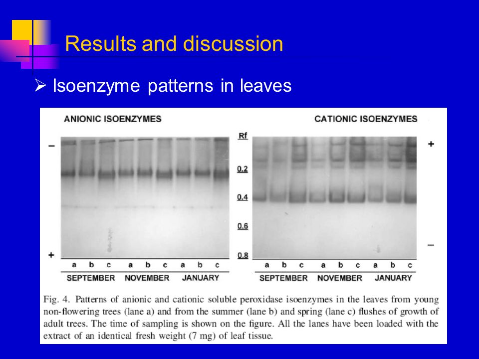 Isoenzyme patterns in leaves Results and discussion