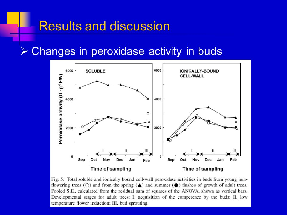 Changes in peroxidase activity in buds